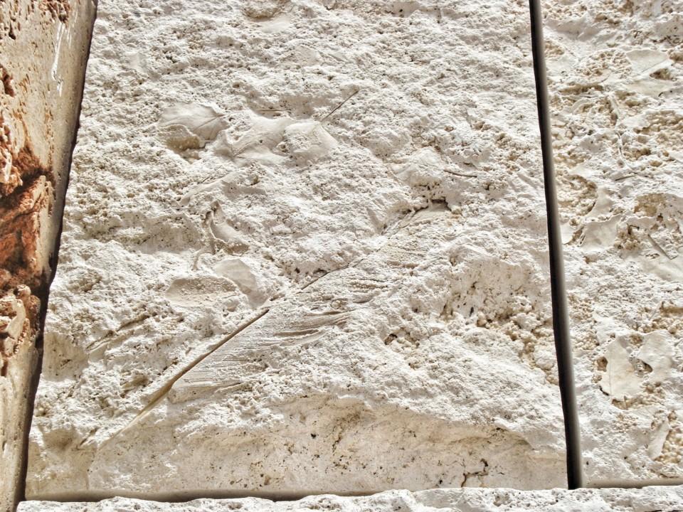 Pero u mermeru - fosilni ostaci - muzej Getty