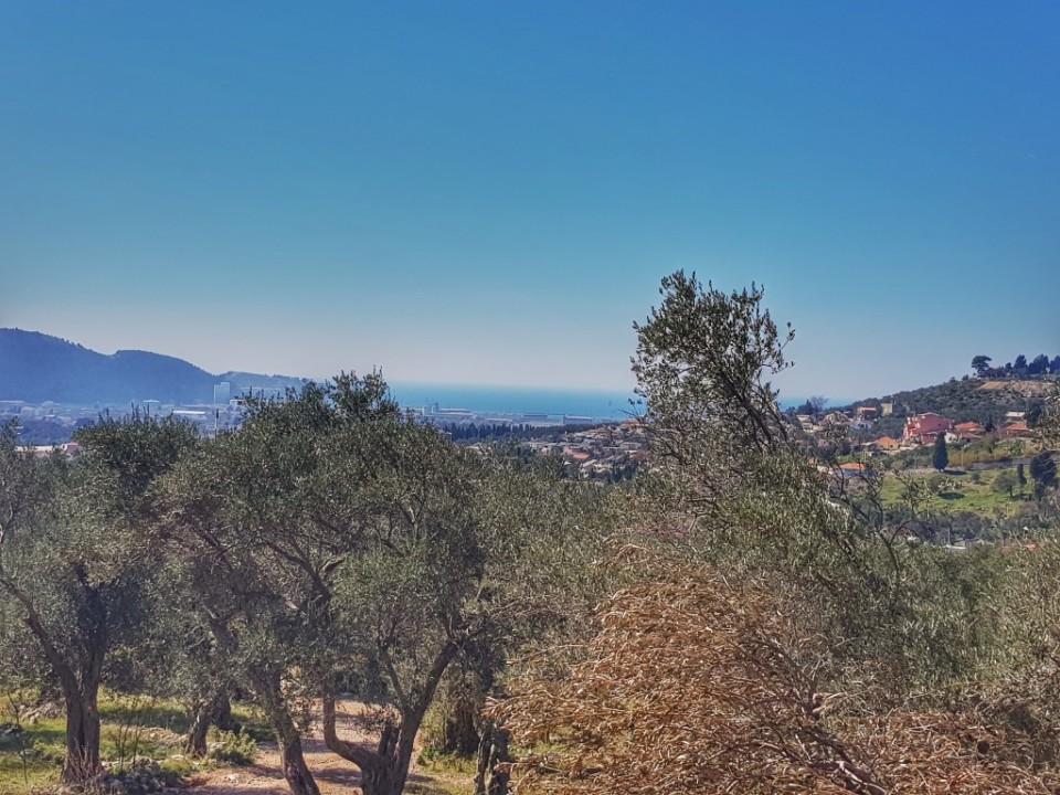 Pogled na more iz maslinjaka